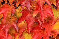 red and brown leaves